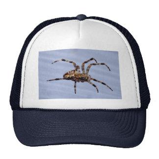 Araña de jardín grande que construye la tela gorro de camionero