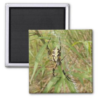 Araña de jardín imán cuadrado