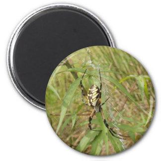 Araña de jardín imán redondo 5 cm