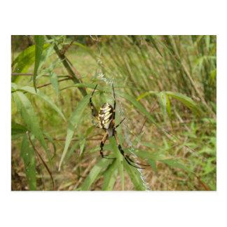 Araña de jardín postales