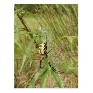 Araña de jardín tarjetas postales
