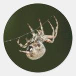 Araña de jardín una etiqueta redonda