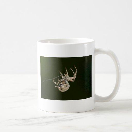 Araña de jardín una taza de café