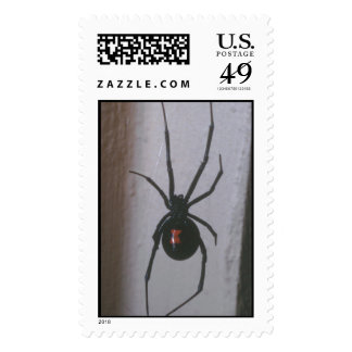 Araña de la viuda negra franqueo