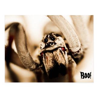 Araña de lobo asustadiza postales