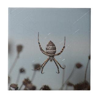 Araña de oro del orbe azulejo cuadrado pequeño