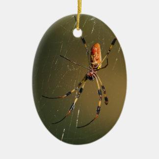 araña de oro del tejedor del orbe ornatos
