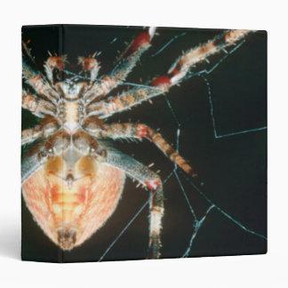"""Araña de patas rojas del Orbe-Web Carpeta 1 1/2"""""""