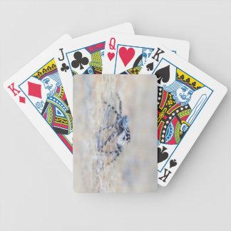 Araña de salto baraja cartas de poker