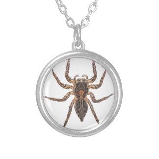 Araña de salto pantrópica femenina colgante redondo