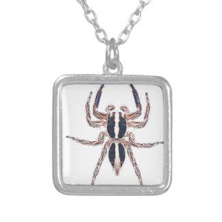 Araña de salto pantrópica masculina colgante cuadrado