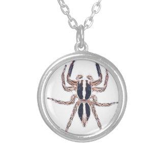Araña de salto pantrópica masculina colgante redondo