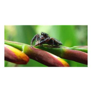 Araña de salto tarjetas fotograficas personalizadas