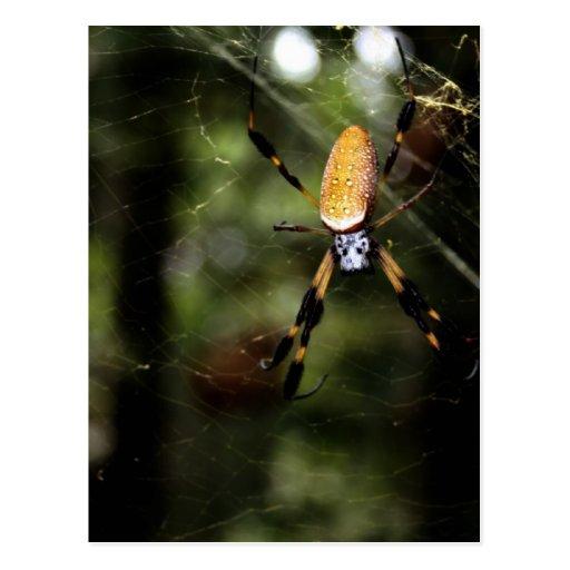 Araña de seda de oro 3519 de Edisto Tarjetas Postales