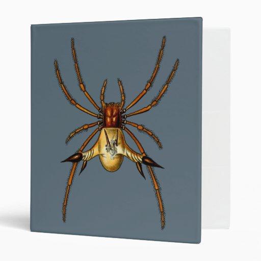 Araña de Spined