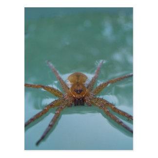 Araña del agua postal