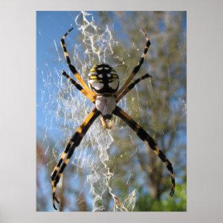 Araña del Argiope Póster