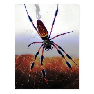 Araña del bicho en el Web Postales