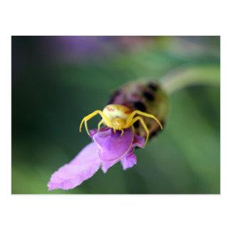Araña del cangrejo de la flor postal