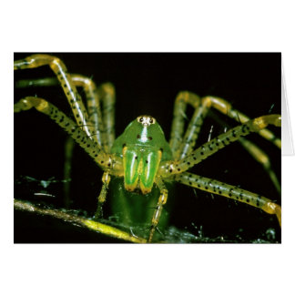 Araña del lince felicitación