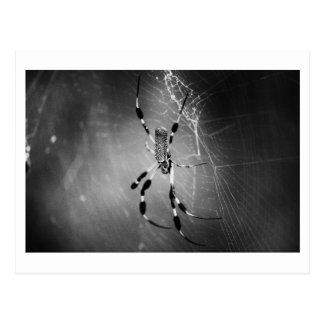 Araña del plátano en el Web - postal de la foto