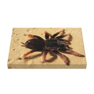 Araña del tarantula de Brachypelma en arena Lona Estirada Galerias
