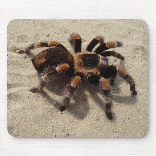 Araña del Tarantula de Flameknee del mexicano Tapete De Ratones