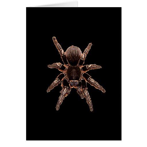 Araña del Tarantula Felicitacion