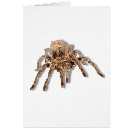 Araña del Tarantula Tarjeta De Felicitación