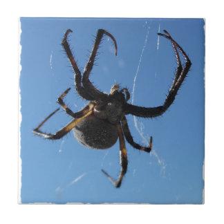 Araña del tejedor del orbe azulejo cuadrado pequeño