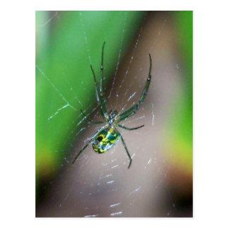 Araña del tejedor del orbe de la huerta tarjeta postal