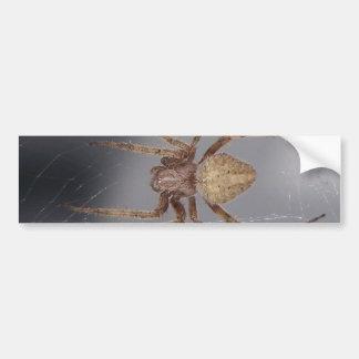 Araña del tejedor del orbe del jardín pegatina para auto