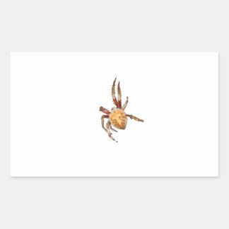 Araña del tejedor del orbe del jardín pegatina rectangular
