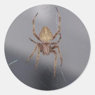 Araña del tejedor del orbe del jardín pegatina redonda