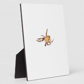 Araña del tejedor del orbe del jardín placa de plastico