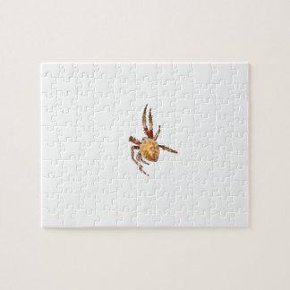 Araña del tejedor del orbe del jardín rompecabeza con fotos