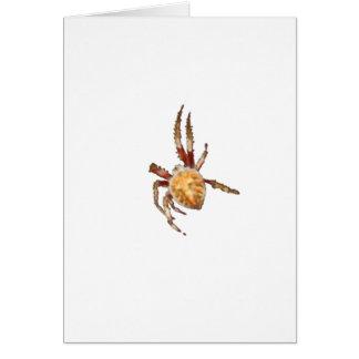 Araña del tejedor del orbe del jardín tarjeta de felicitación