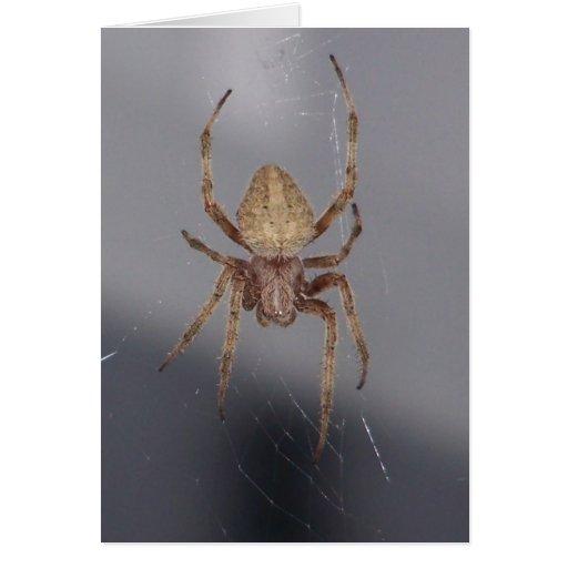 Araña del tejedor del orbe del jardín tarjetas