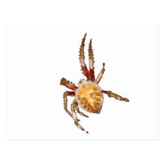Araña del tejedor del orbe del jardín tarjetas postales