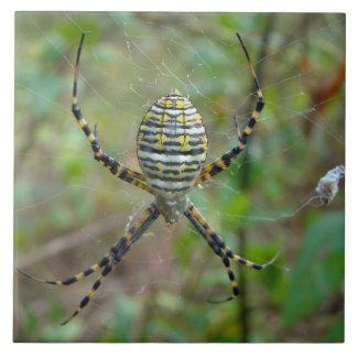 Araña del tejedor del orbe del trifasciata del Arg Azulejo Cuadrado Grande