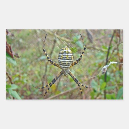 Araña del tejedor del orbe del trifasciata del rectangular altavoces