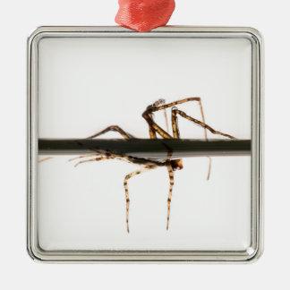 Araña en el agua adorno navideño cuadrado de metal
