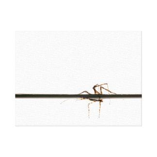 Araña en el agua impresión en lienzo