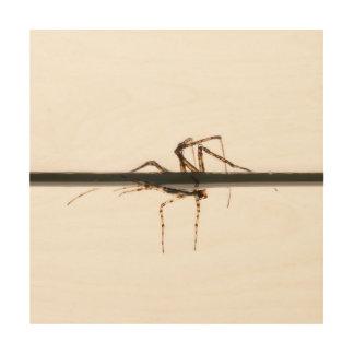 Araña en el agua impresión en madera