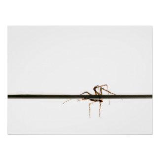 Araña en el agua perfect poster