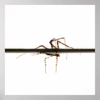 Araña en el agua póster