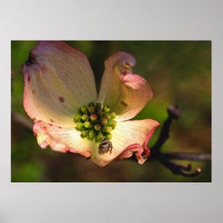Araña en Flowerr Póster