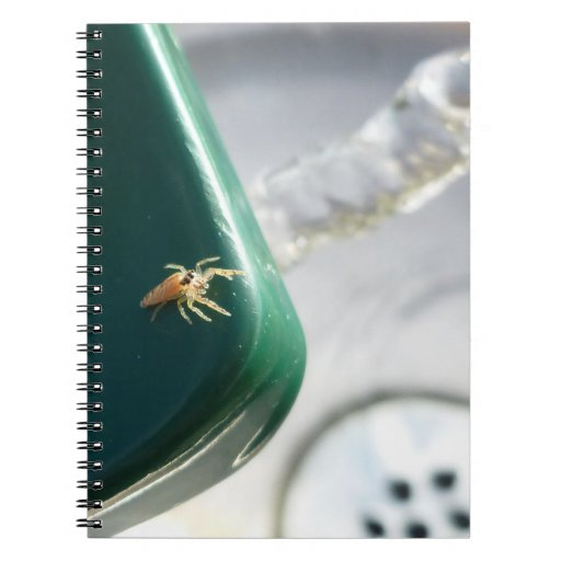 Araña en foutain del agua cuadernos