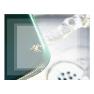 Araña en foutain del agua plantilla de membrete