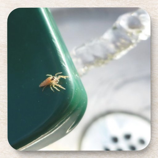 Araña en foutain del agua posavasos